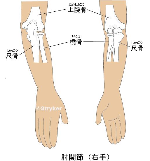 肘関節肉付