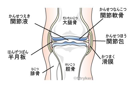膝関節正面改訂c