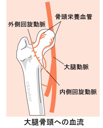 骨頭の血流c